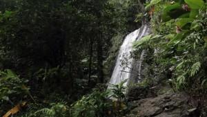 San_Juan_rainforest